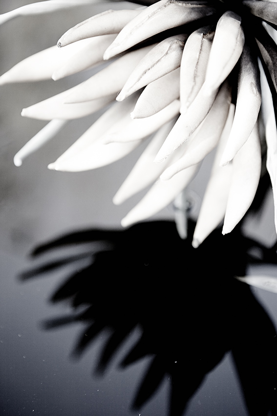 spiegelung__0236